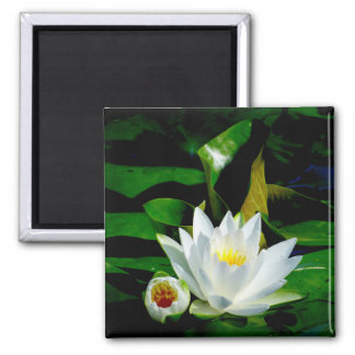 Perfect White Water Lily and Bud Square Magnet