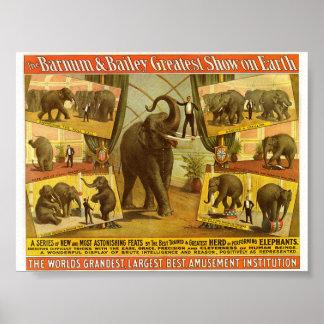 Performing Elephants Barnum & Bailey Circus Poster