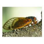 Periodical Cicada Postcard. Postcard