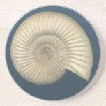 Perisphinctes Ammonite fossil Beverage Coaster