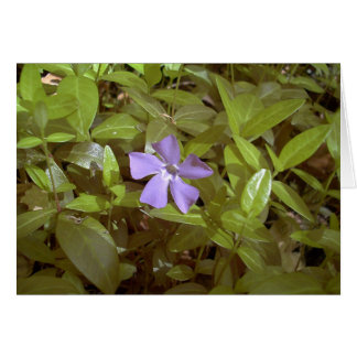 Periwinkle at Letchworth Card