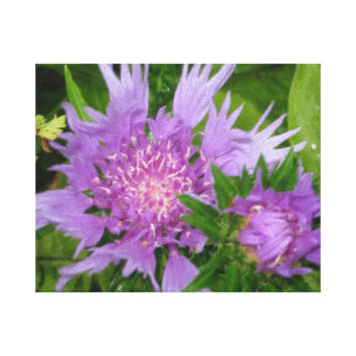 Periwinkle-colored Stoke s Aster Gallery Wrapped Canvas