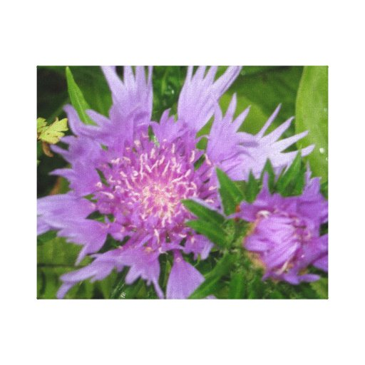 Periwinkle-colored Stoke's Aster Gallery Wrapped Canvas