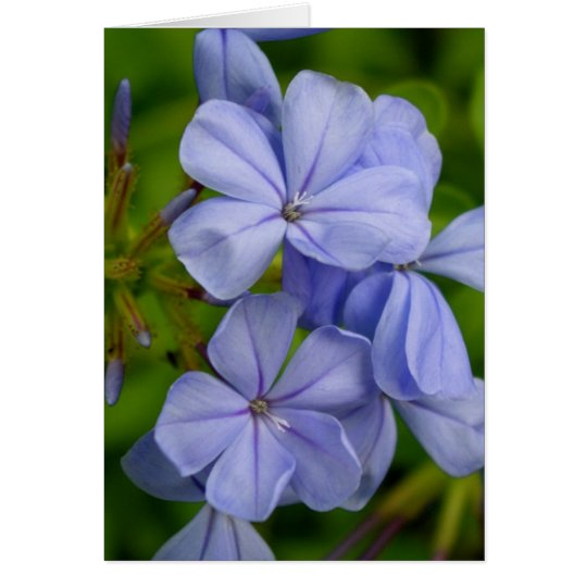Periwinkle Note Card