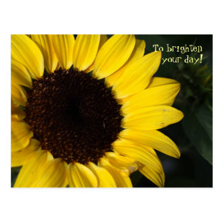 Perky Sunflower Thinking of You Postcard