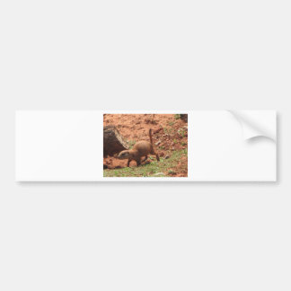 perry dog bumper sticker