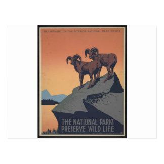 Perserve Wild Life Postcard