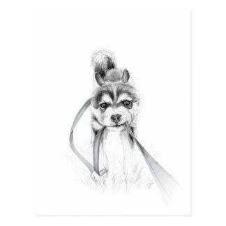 Perseverance, A Siberian Husky Postcard