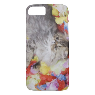 Persian Cat, Felis catus, Brown Tabby, Kitten, 2 iPhone 7 Case