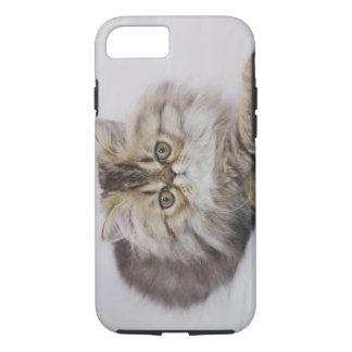 Persian Cat, Felis catus, Brown Tabby, Kitten, iPhone 7 Case