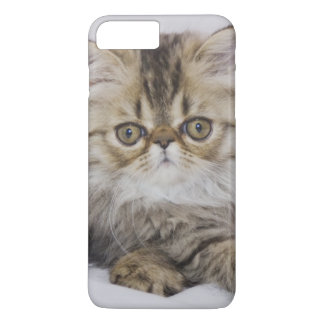 Persian Cat, Felis catus, Brown Tabby, Kitten, iPhone 7 Plus Case