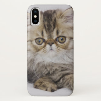 Persian Cat, Felis catus, Brown Tabby, Kitten, iPhone X Case