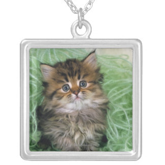 Persian cat; is one of the oldest breeds of cat. silver plated necklace