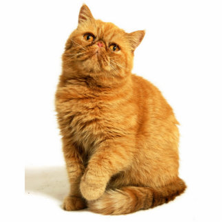 Persian cat standing photo sculpture