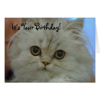 Persian Kitten Birthday Card