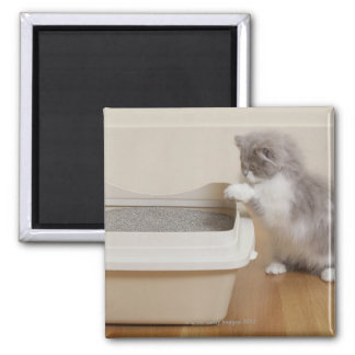 Persian Kitten looking at litter box Square Magnet