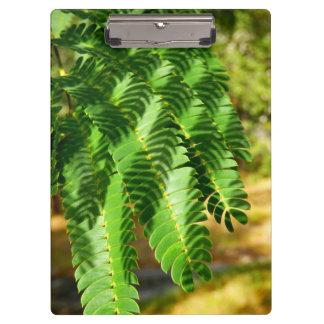 Persian Silk Tree Leaves Clipboard