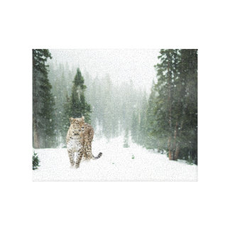 Persian Snow Leopard Canvas Print