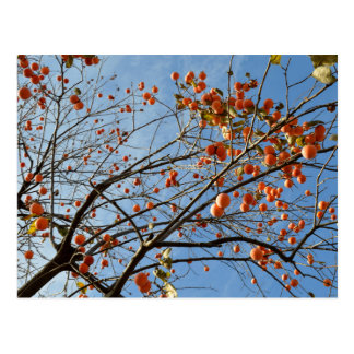 Persimmon (kaki): Japan Postcard