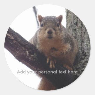 Personal squirrel sticker