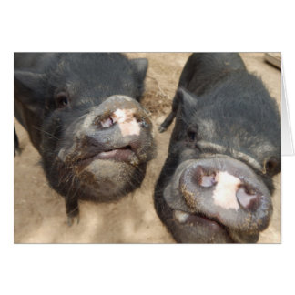 Personalised Double Snouts Black Mini Pigs Card