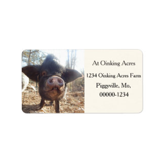Personalized Black Mini Pig Address Labels