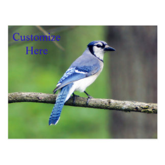 Personalized Blue Jay Postcard