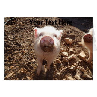 Personalized Dirty Snout Mini Pig Greeting Card