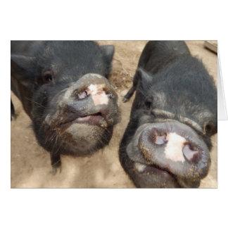 Personalized Double Snouts Black Mini Pigs Card