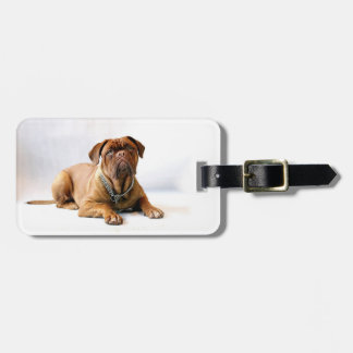 Personalized Mastiff / Dog Photo Luggage Tag