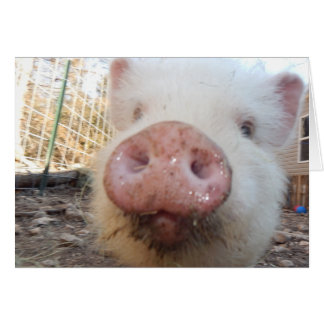 Personalized Mini Pig Snout Card