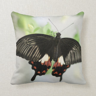 Personalized Swallowtail Butterfly Cushions