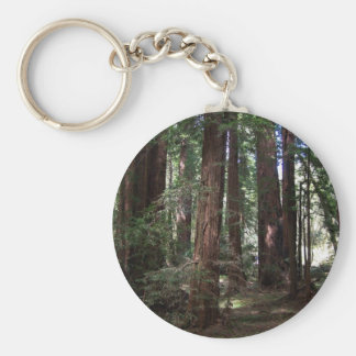 Perspective of the redwoods key ring