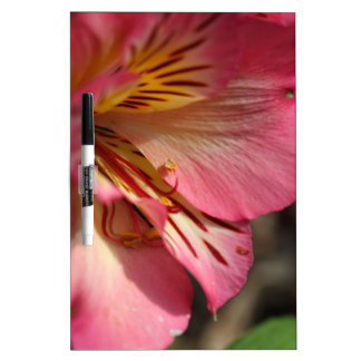 Peruvian lily (Alstroemeria aurea) Dry Erase Board