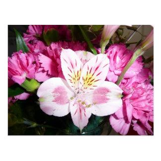 Peruvian Lily Postcard