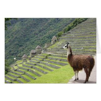 peruvian llama card
