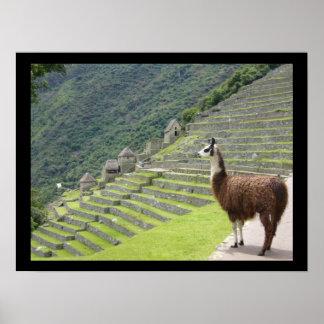 peruvian llama poster