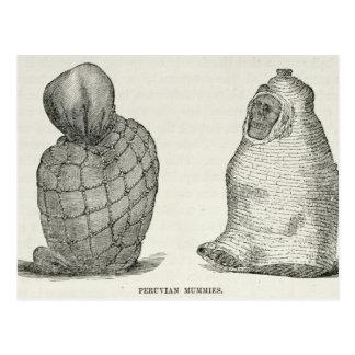 Peruvian Mummies Postcard