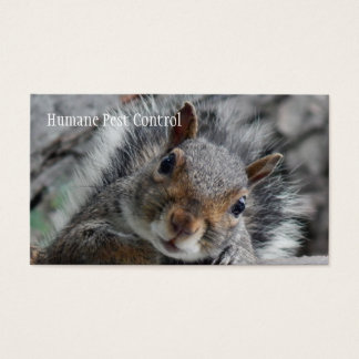 Pesky Squirrel Business Card