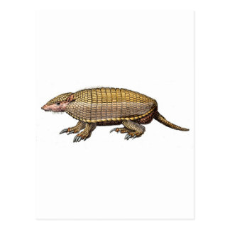 Pet Armadillo Postcard