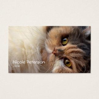 pet beauty salon - persian cat