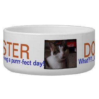 PET DISH.501.MASTER DOG AND CAT PET BOWL