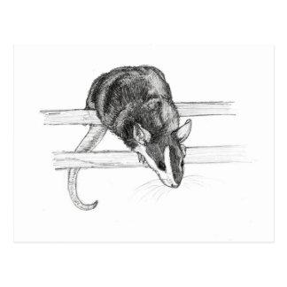 Pet mouse sketch postcard by Nicole Janes