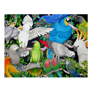 Pet Parrots of the World Postcard