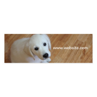 Pet photography, dog trainers, dog walkers business card