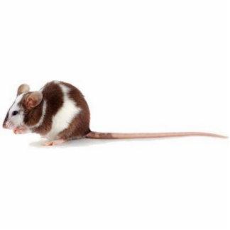 pet rat standing photo sculpture
