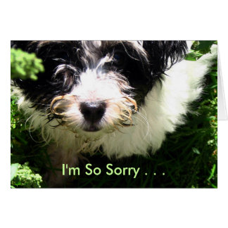 Pet Sympathy - Havanese Puppy. Card