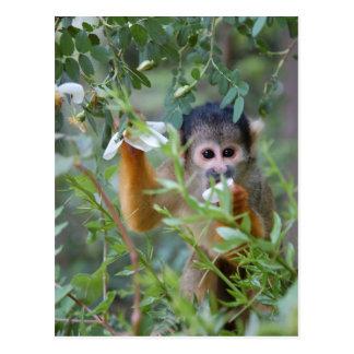 Petal Monkey Postcard