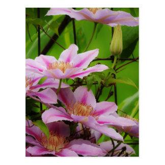 Petal Pink Postcard
