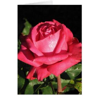 Peter Frankenfeld Hybrid Tea Rose 001 Greeting Card